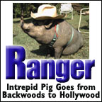 Ranger the Pig